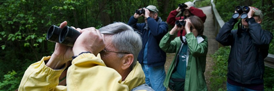 CITIZEN PATRIOT • DAVE WEATHERWAX Mikey Kress, left, along with a group of watchers, points their binoculars up toward a tree top as they identify a bird during the weekly Tuesday morning nature hike with Gary Siegrist at the Dahlem Center.