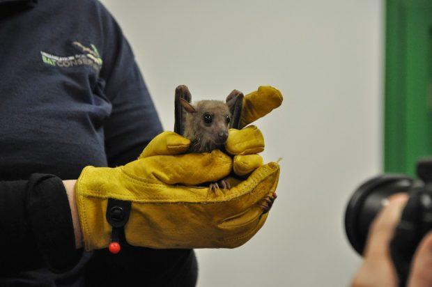 Bats at Dahlem!