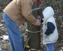 Drill Tree 3