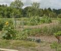 Dahlem's Community Gardens 2015