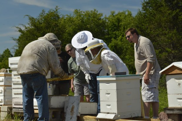 Intro to Bee Keeping II