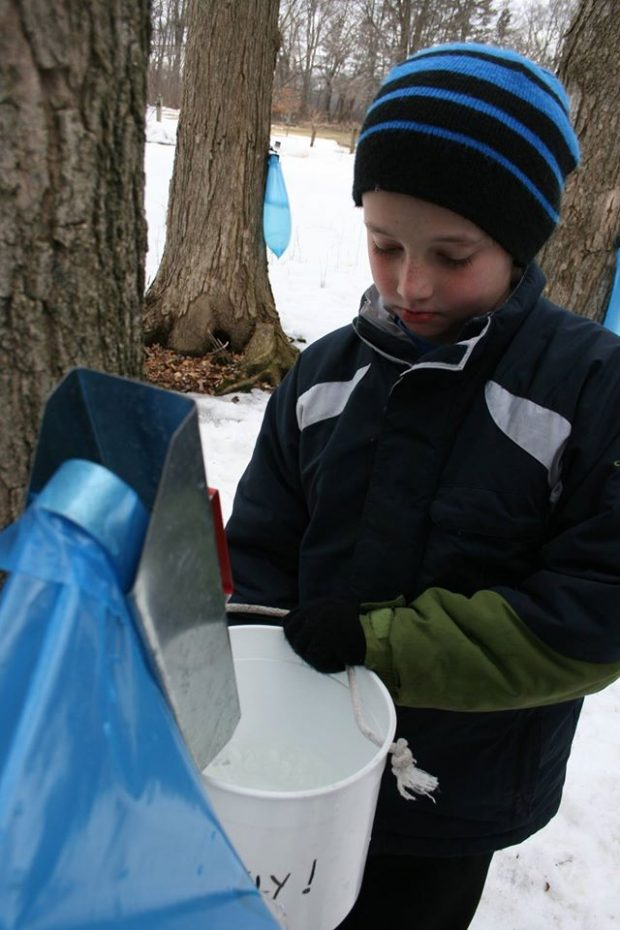 Maple Sugaring – Townsend Elem. (3rd grade)