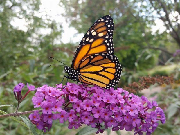 Birds, Blooms, & Butterflies Festival