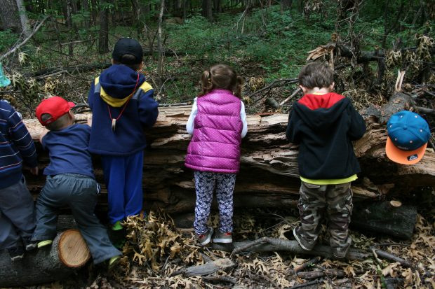 Outdoor Adventure Day Camp; Session 3 Forest Explorers (for ages 3-4 years)